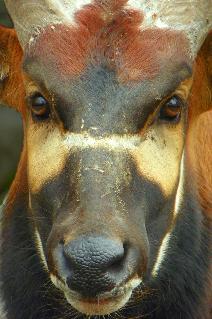 Bongo In Your Face By Dingodogphotography On Deviantart