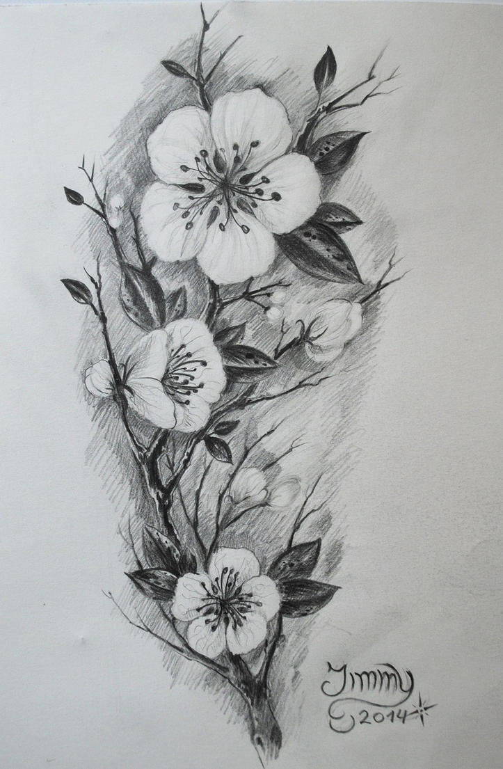 Cherry Blossom Sketch Black And White Cherry Blossom Sketch by