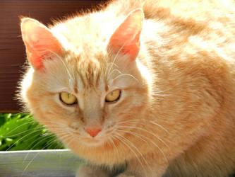 Bob the cat by aeroblade88