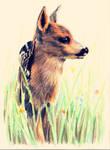 Bambi by Pinjachi