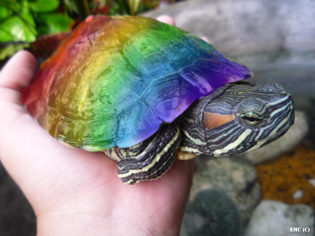 rainbow turtle by VariaZim on DeviantArt