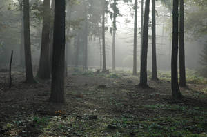 Misty Bench by robotc