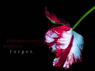 Terrified to Forget by My-New-Moon