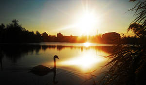 Swan Lake 2 by Magic-diamond