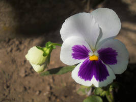 Soft purple by Magic-diamond