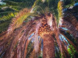 Happy palm by Magic-diamond