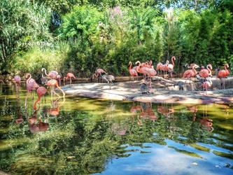 Flamingo paradise  by Magic-diamond