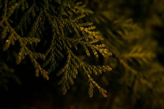 Fresh nature in the night