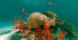 Coral reef [360 Panorama]
