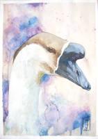 African goose `s portrait by sagaslover