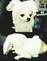 Follow the White Rabbit by laura-kristen