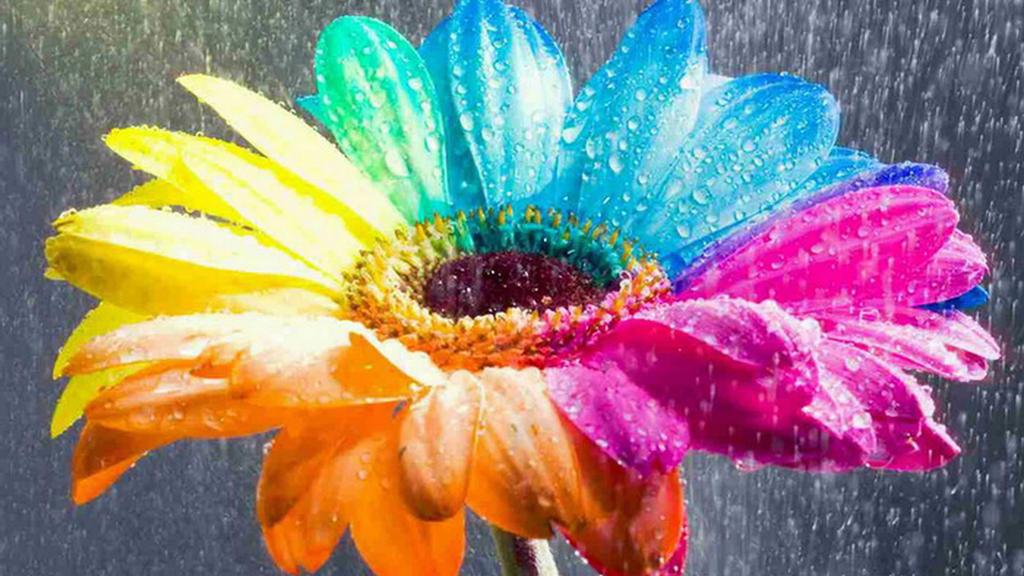 rainbow flowers wallpaper paintings - photo #1