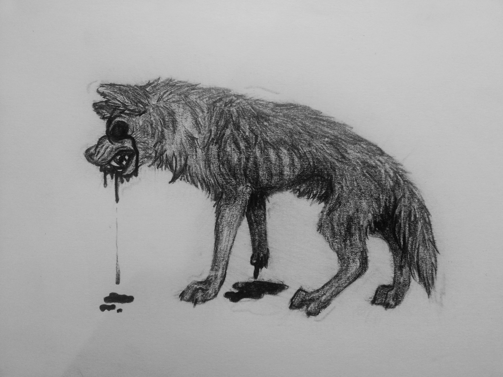 Drawing - Wolf by k0FFe
