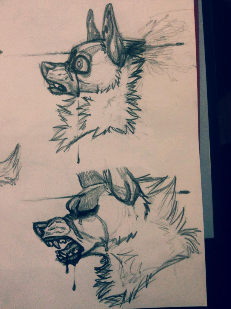 Wolf - TEST [4] by k0FFe