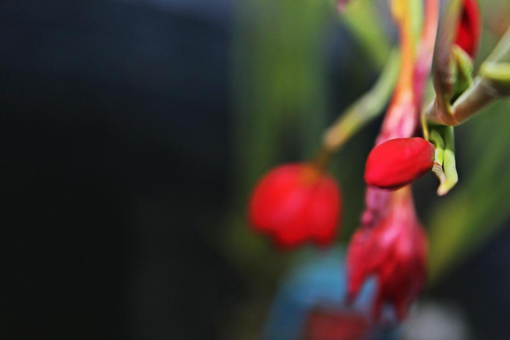 hanging red by Tsukiyomi98Tenshi