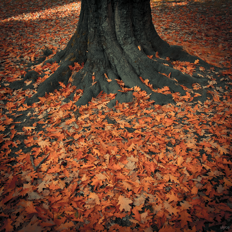 Root by ulyce