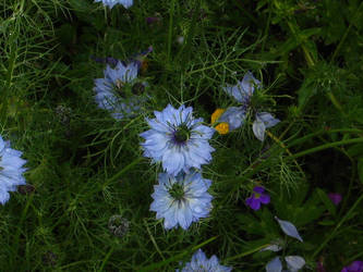 Funky blue flowers. by Regenstock