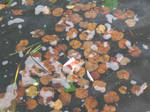Drowning leaves and garbage.