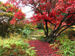 Maple reds and greens.