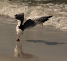 seagull by Aakami
