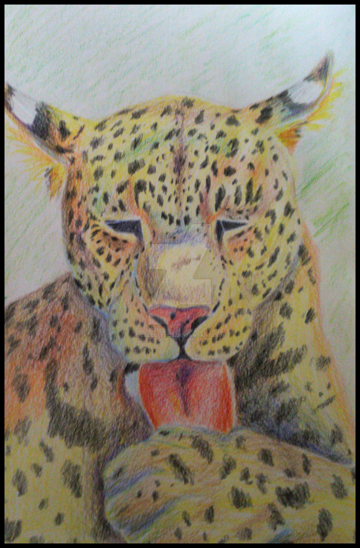 Jaguar by celeste1528