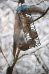 snow squirrel by craig1503