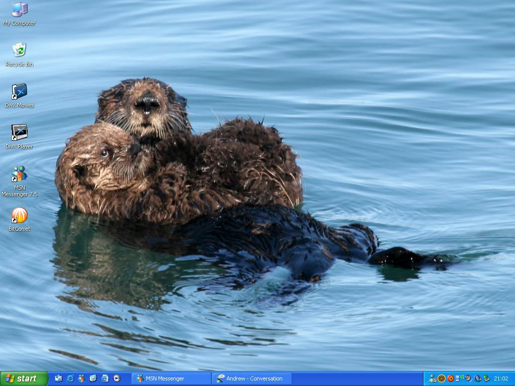 Sea otters wallpaper by gabzie ...