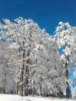 Snow everywhere by NanamiHoro