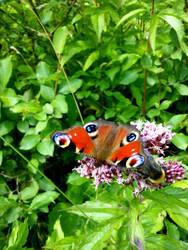 Butterfly 1 by NanamiHoro
