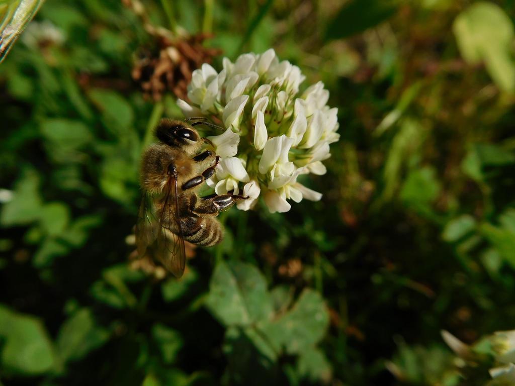 Honeybee by NanamiHoro