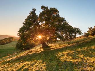 Sun Tree by mibreit