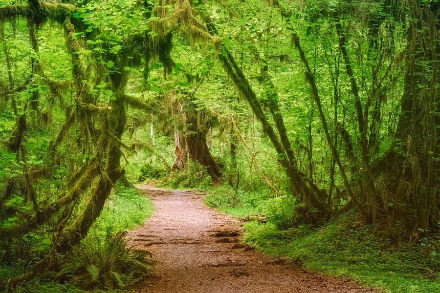 The magic Pathway