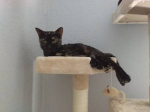 Ember On The Cat Tower