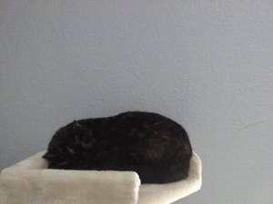 Rosie Asleep On The Cat Tower