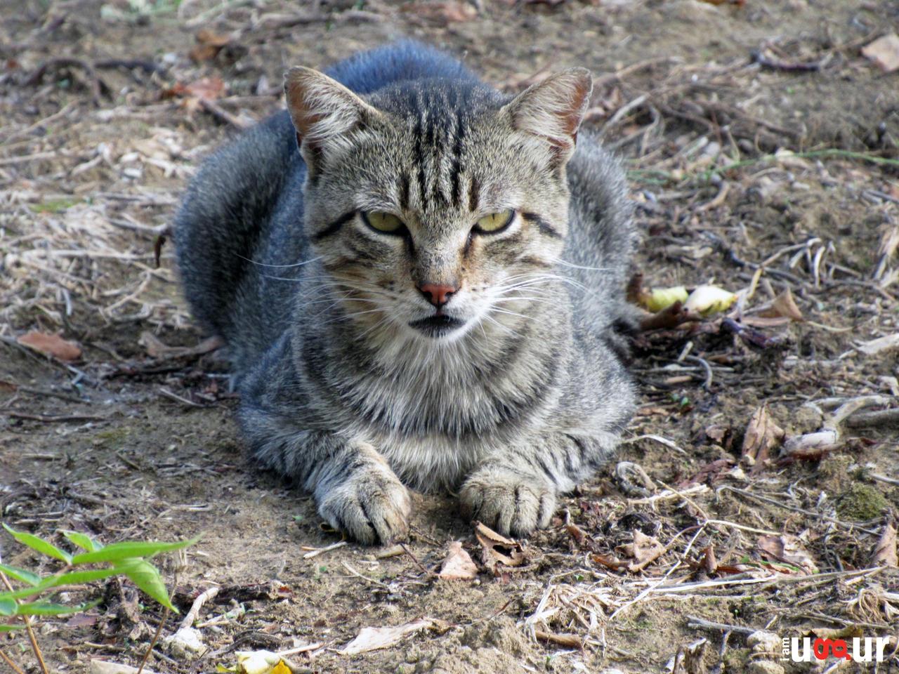 Cat by Mottcalem
