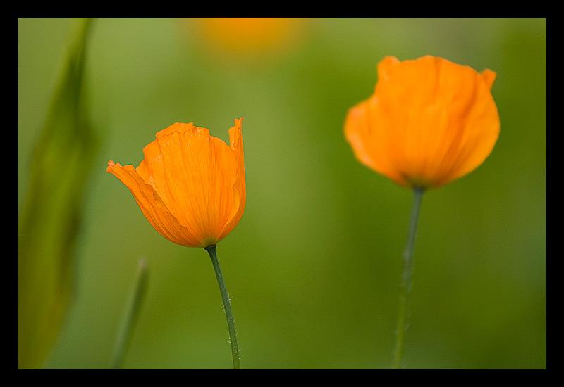 Flowers by SebastianSkarp