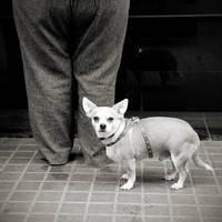 Dog by milan-massa