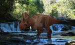 Canada's New Centrosaurine Ceratopsid.
