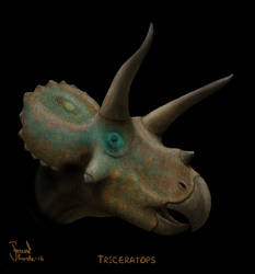 Triceratops head.