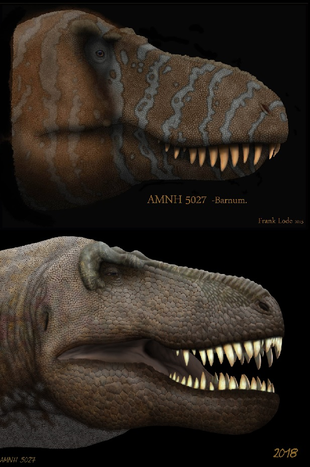 AMNH 5027. by Frank-Lode