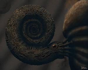 The Ammonite.