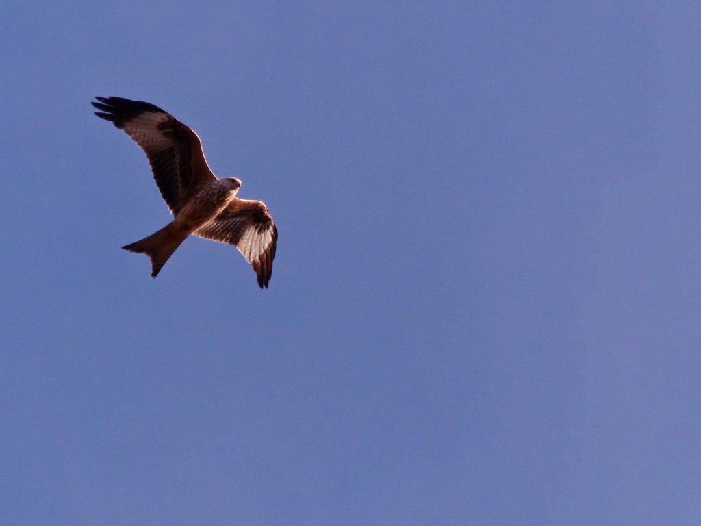 Fly high by Zajhra