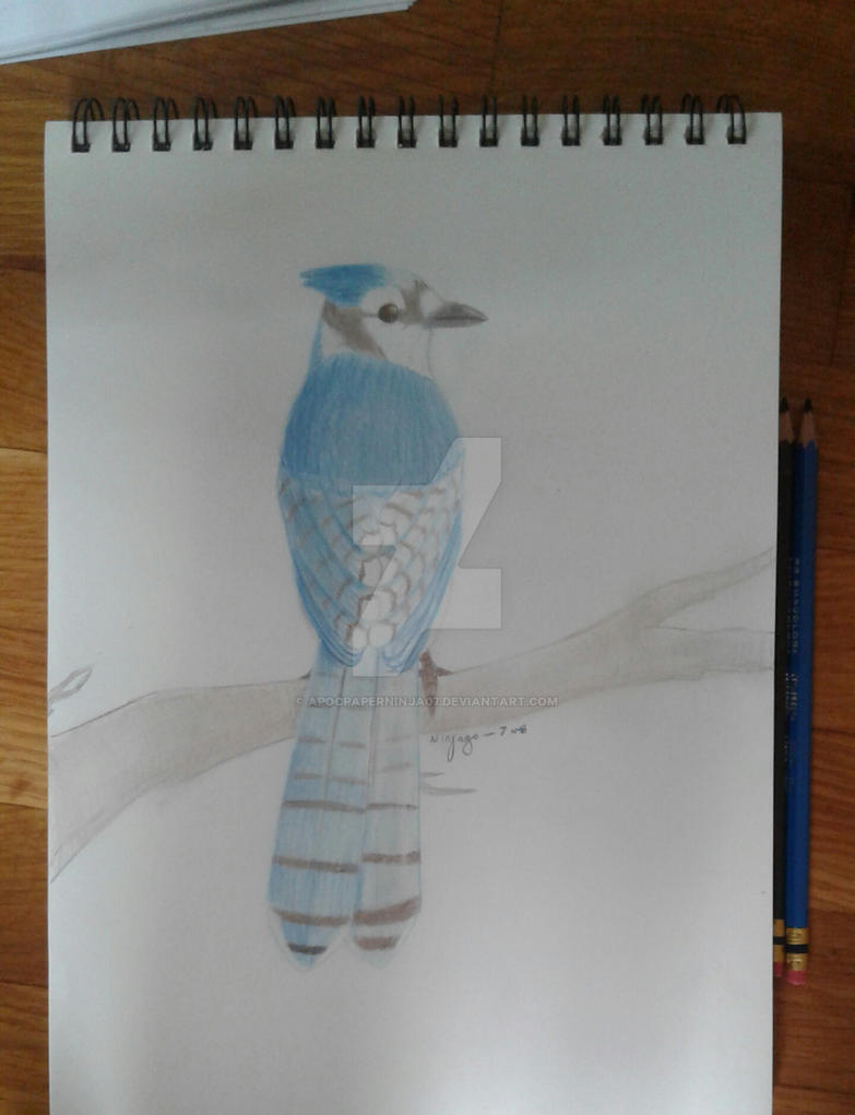 Blue Jay (using only a blue and a brown pencil) by Ninjago-7
