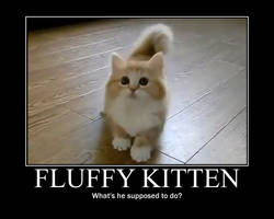 Fluffy Kitten by Onikage108