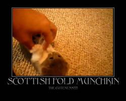 Scottish Fold Munckin Kitten by Onikage108