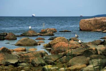 Sea Gulls by dark-cheshire