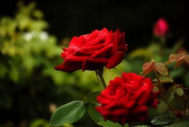 Red 2 by dark-cheshire