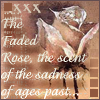 Faded Rose by shetakaey