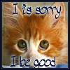 Sorry Cat by shetakaey