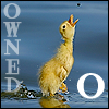 O is for Owned by shetakaey